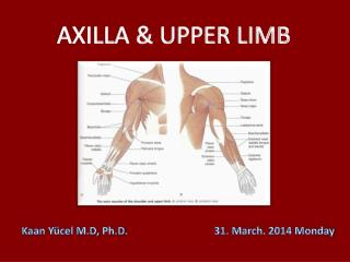 AXILLA & UPPER LIMB