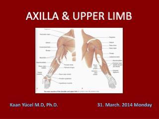 AXILLA & UPPER LIMB