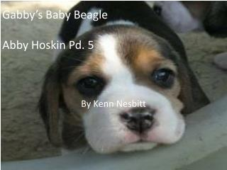 Gabby�s Baby Beagle Abby  Hoskin  Pd. 5