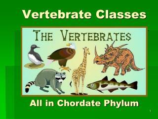 Vertebrate Classes