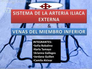 SISTEMA DE LA ARTERIA ILIACA EXTERNA