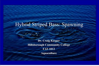 Hybrid Striped Bass: Spawning
