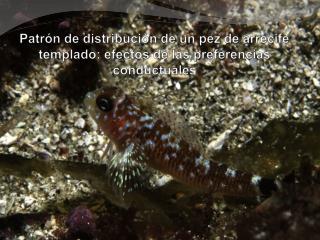 Patr�n de distribuci�n de un pez de arrecife  templado: efectos de las preferencias conductuales