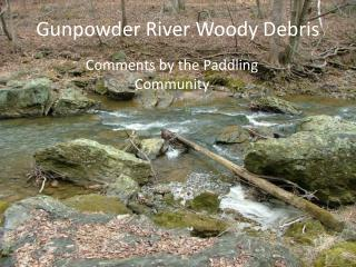 Gunpowder River Woody Debris