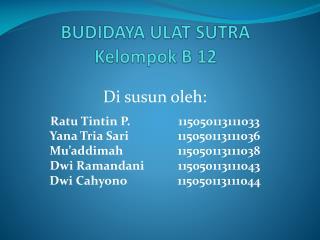 BUDIDAYA ULAT SUTRA Kelompok B 12