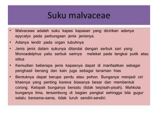 Suku malvaceae