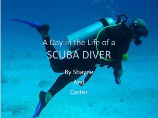 A Day in the Life of a SCUBA DIVER
