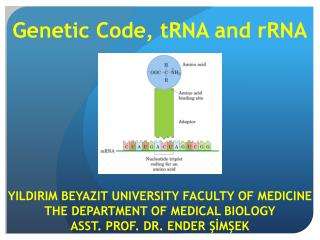 Genetic Code ,  tRNA and rRNA