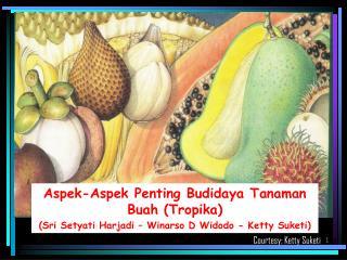 Aspek-Aspek  Penting  Budidaya  Tanaman  Buah  (Tropika)