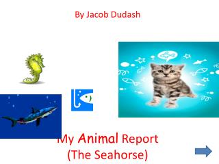 My  Animal  Report  (The Seahorse)
