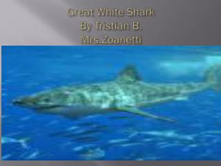 Great White Shark  By  Tristian B.  Mrs.Zoanetti