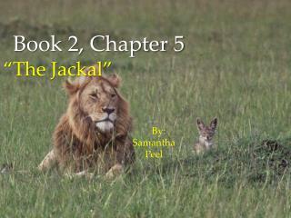 """""""The Jackal """""""