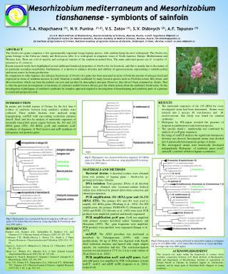 Mesorhizobium mediterraneum and  Mesorhizobium  tianshanense  –  symbionts  of  sainfoin