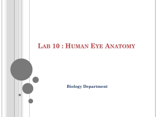 Human Anatomy Lab 10