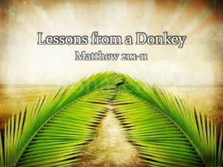Lessons from a Donkey