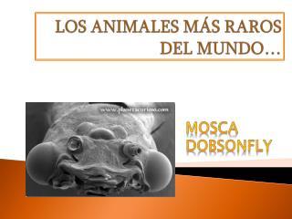 LOS ANIMALES M�S RAROS DEL MUNDO�