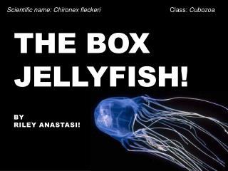 The Box Jellyfish!