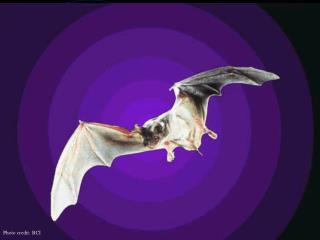 Going Bats