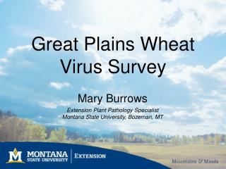 Great Plains Wheat Virus Survey
