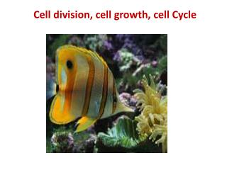 Cell division, cell growth, cell Cycle