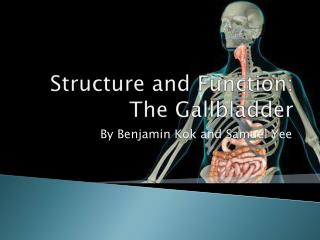 Structure and Function: The Gallbladder