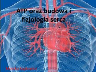 ATP oraz budowa i fizjologia serca