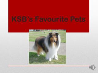 KSB's Favourite Pets
