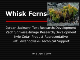 Whisk Ferns
