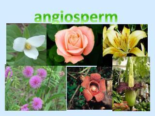 angiosperm