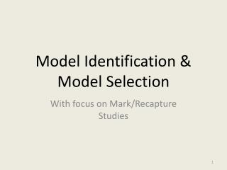 Model Identification & Model Selection