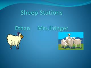 Sheep Stations Ethan      Mrs.Kringer