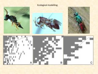 Ecological modelling
