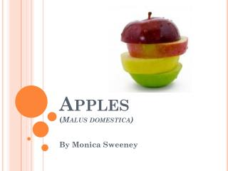 Apples ( Malus domestica )