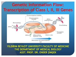 YILDIRIM BEYAZIT  UNIVERSITY FACULTY OF MEDICINE THE DEPARTMENT OF MEDICAL BIOLOGY