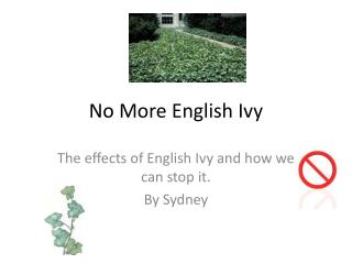 No More English Ivy