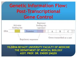 Genetic Information  Flow: Post-Transcriptional  Gene  C ontrol