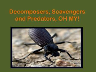 Decomposers, Scavengers and Predators, OH MY!