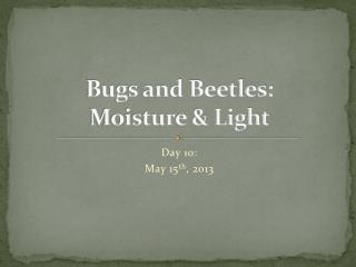 Bugs and Beetles: Moisture & Light