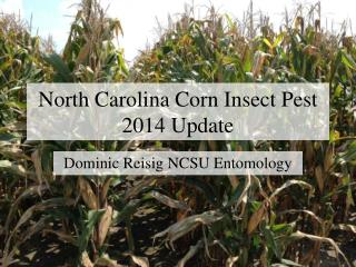 North Carolina Corn Insect Pest  2014  Update