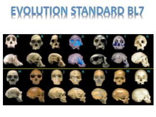 Evolution  Standard BL7