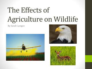 The Effects of Agriculture on Wildlife