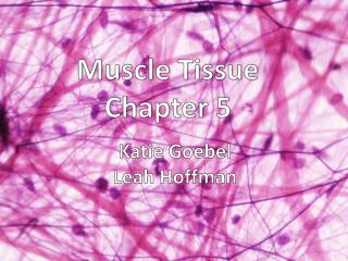 Muscle Tissue  Chapter  5