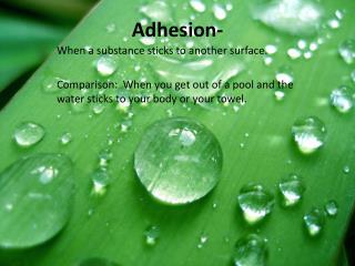 Adhesion-