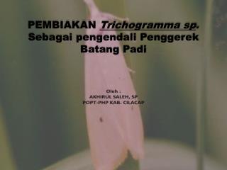 PEMBIAKAN  Trichogramma  sp . Sebagai pengendali Penggerek Batang Padi