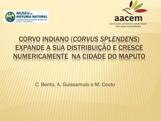 C. Bento, A.  Guissamulo  e M.  Couto
