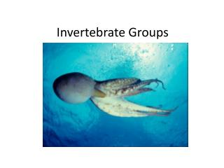Invertebrate Groups