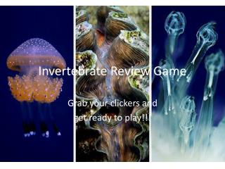 Invertebrate Review Game