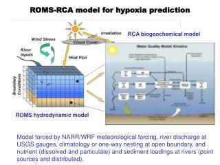 ROMS hydrodynamic  model