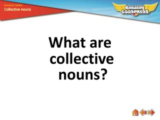 What are  collective nouns?