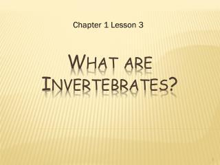 What are Invertebrates?